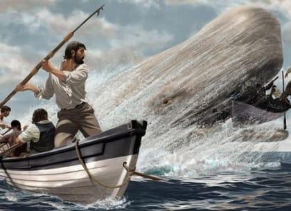 săn cá voi
