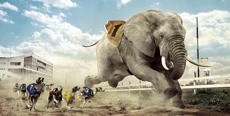 voi phi nước đại
