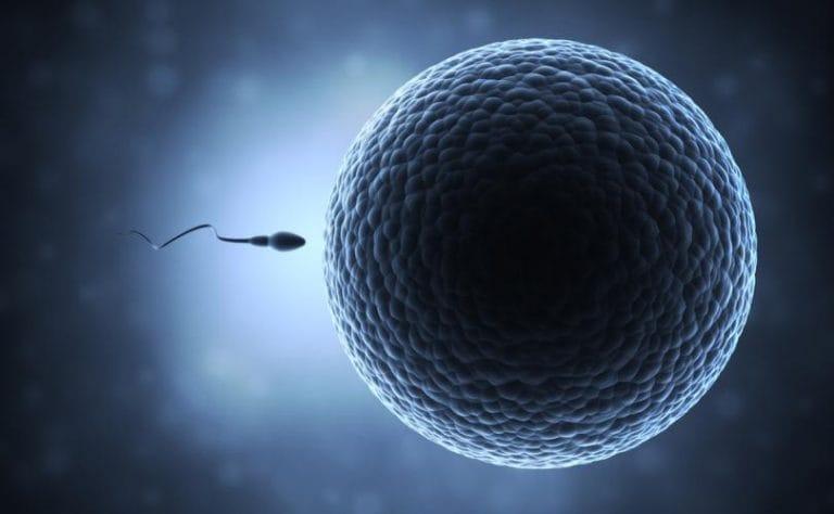 Bộ óc loài người cũng như trứng của loài người