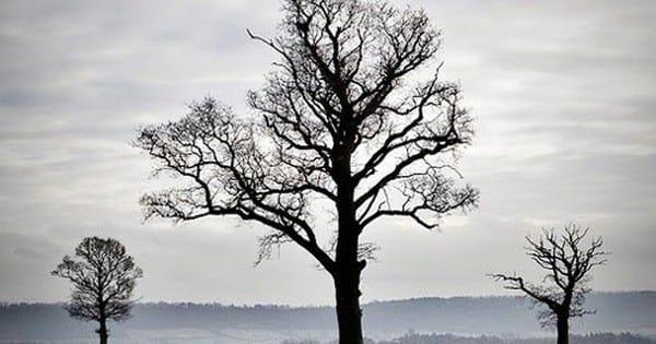 Chuyện ba cái cây và bài học cuộc sống ý nghĩa