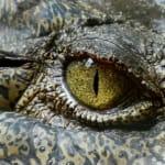 khởi nghiệp cùng bí quyết cá sấu