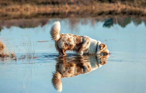 Người thầy thứ hai của nhà hiền triết là một chú chó
