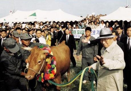 """Ông dắt một con bò băng ngang Bàn Môn Điếm trở lại miền Bắc để """"trả lại"""" món nợ đầy nước mắt năm xưa…"""