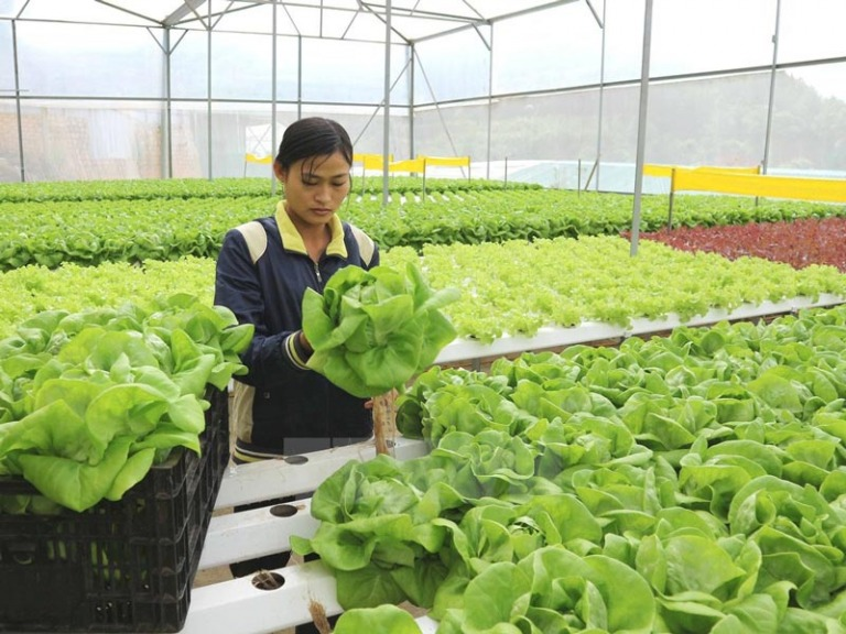 Hai ngành nghề tôi tin là Việt Nam có thể dẫn đầu tại ASEAN nếu biết phát triển đồng bộ và sáng tạo. Thứ nhất là nông nghiệp công nghệ cao
