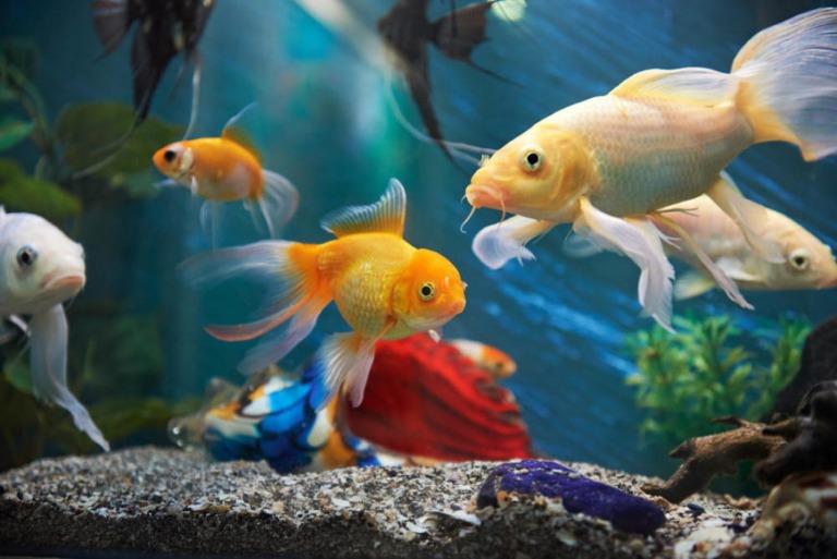 """""""Nếu anh chị muốn học điều gì đó về loài cá, hãy ngồi trước bể cá và quan sát chúng."""""""