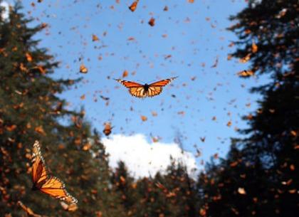 Năm bài học đáng trân trọng từ loài Bướm