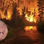 Xót xa trước xác của nhiều loài động vật chết cháy, chết vì ngạt khói do ảnh hưởng của cháy rừng tại Amazon.Xót xa trước xác của nhiều loài động vật chết cháy, chết vì ngạt khói do ảnh hưởng của cháy rừng tại Amazon.