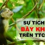 Hiểu đầu cơ từ sự tích bầy khỉ trên thị trường chứng khoán